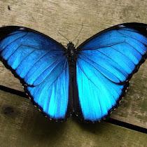 Peruvian Amazon: Species Spotlight
