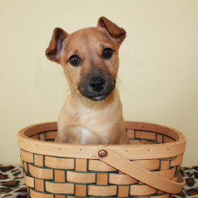 Christy by Sharon Scholtes - Animals - Dogs Portraits ( canine, green, basket, brown, puppy, dog )