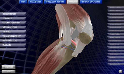 Anatomy Knee