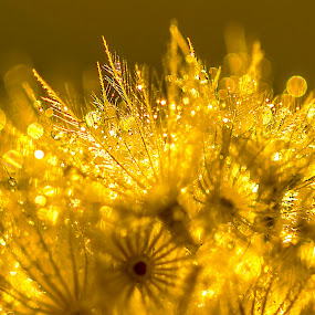 Golden Bokeh Delight by Emily James - Nature Up Close Leaves & Grasses ( sunset; bokeh; golden; macro; grass,  )