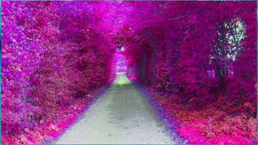 【免費娛樂App】風景壁紙-APP點子