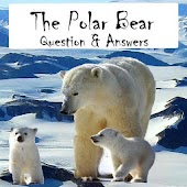 Polar Bear Questions & Answers