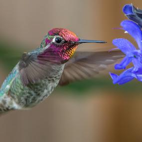 by Jim Malone - Animals Birds (  )