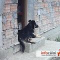 Excelent paznic al casei