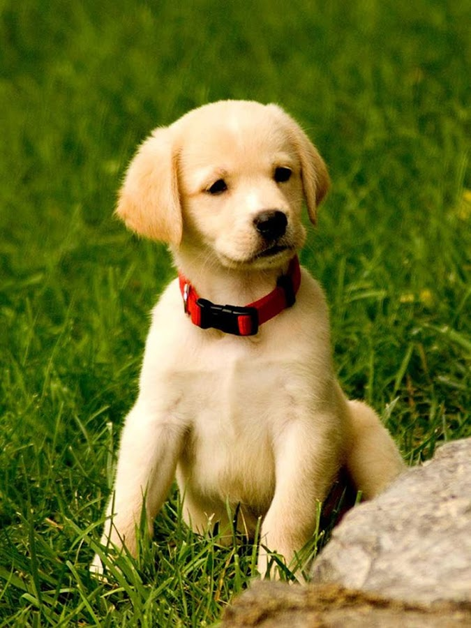 cute dog wallpapers android apps on google play