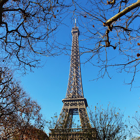 Eiffel by Alin Gavriluta - Buildings & Architecture Public & Historical ( paris, eiffel tower, park, autumn, trees,  )
