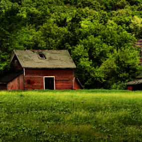 Nestled In The Forest by Michael Priest - Landscapes Prairies, Meadows & Fields ( farm, wisconsin, barn, field. trees. sheds, spring )