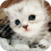 Lovely kittens HD
