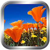 3D Flower wallpapers