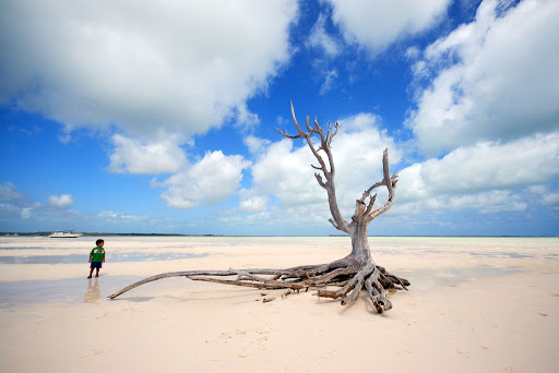 The lone tree at Harbour Island, Eleuthera, Bahamas.