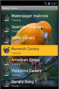 Canary Lovers- screenshot thumbnail