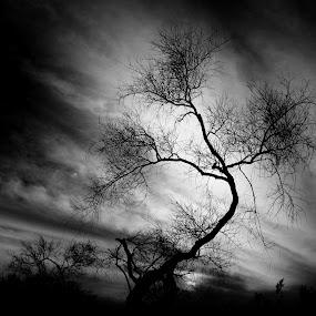 I'm alive!  by Deb Bulger - Black & White Landscapes ( clouds, natural light, desert, nature, black and white, weather, trees, landscape,  )