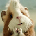 Funny Cute pet Photography icon