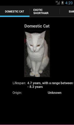 Cat Breeds 101