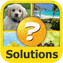4 Pics Puzzle Plus Solutions icon