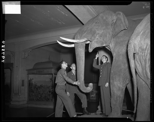 Servicemen viewing Indian Elephant Group, 1944