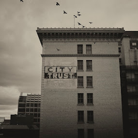 Dark City by Andrew Ng - Buildings & Architecture Public & Historical ( office buliding, city trust building, #yegdt, edmonton, birds, downtown, brick facade )