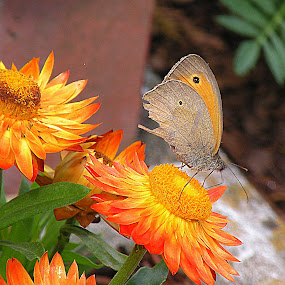 Flowers with butterflies by Ana France - Flowers Flower Gardens ( 2014 -06 -14 tim matavž )