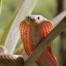 Reptiles of the Philippines
