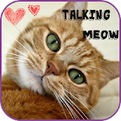 My Talking Meow
