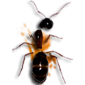 insect smarsher logo