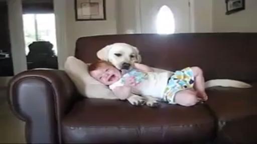 El mejor Amigo del Hombre