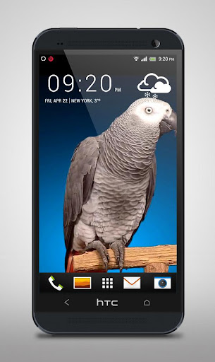 Grey Parrot Live Wallpaper
