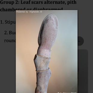 TwigID - screenshot thumbnail
