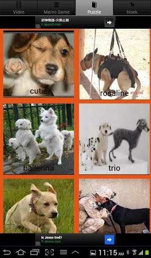 Pet Rescue Dog