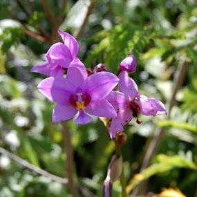 by Joko Pix - Flowers Flowers in the Wild