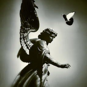 Advent of peace by Katsuhiro Kaneko - Buildings & Architecture Statues & Monuments ( canon, monochrome, black and white, cantral park, manhattan, new york, dove, bird, angel, eos, statue, bethesda fountain, monument, new york city,  )