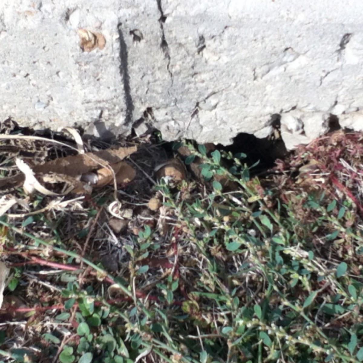 Mole or mouse hole