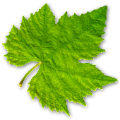 Vinooracle - wine guide