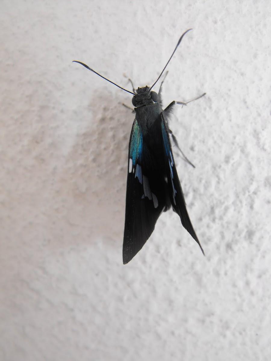 Small Blue-ish Skipper Butterfly