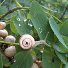 Caracol. Snail