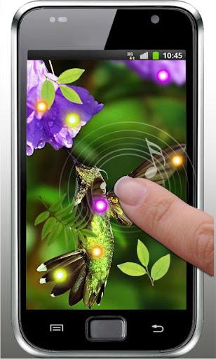 【免費個人化App】Hello Colibri live wallpaper-APP點子