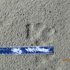 Bobcat Footprint
