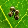 Bug eggs