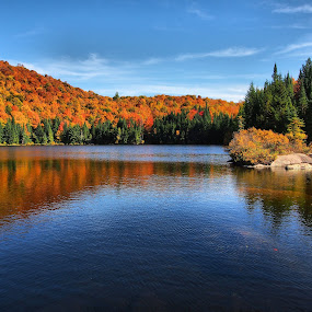 Fall Colors 3 by Costas Tsirgiotis - Landscapes Forests ( fall, color, colorful, nature )