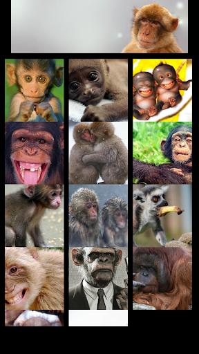 Monkey Wallapaper