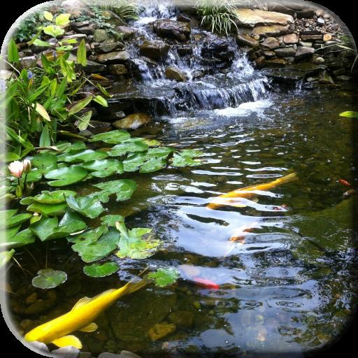 鯉ビデオライブ壁紙と池 個人化 App LOGO-硬是要APP