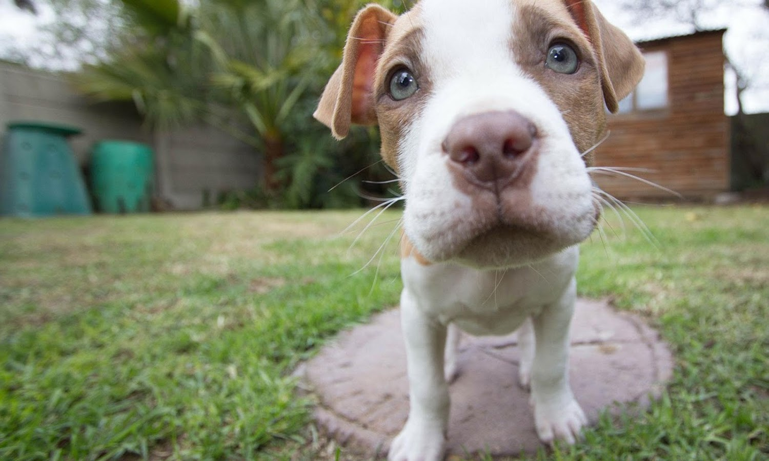 Puppy Dog HD Photo Apl Android Di Google Play