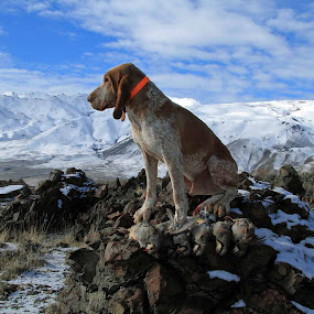 A Great Day by Ralph MInnitte - Animals - Dogs Portraits ( romeo, animal snow  )