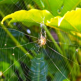 by Eleanor McCabe - Nature Up Close Webs