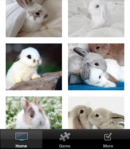【免費娛樂App】Easter Bunny Pictures-APP點子