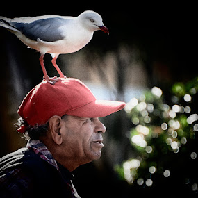 Seagull Hat by Jim Merchant - People Street & Candids ( seagull, sydney, man, character )