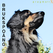 Brukspoäng2