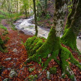 Zeleni vir by Stanislav Horacek - Landscapes Forests