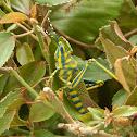 Aak Grasshopper