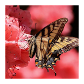 Butterfly puzzle game